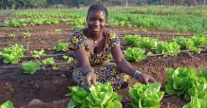 drip irrigation in Africa