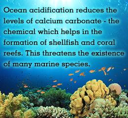 CO2 in our atmosphere is linked to ocean acidity.