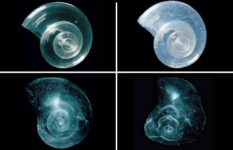 Marine life is threatened because of acidification of oceans.