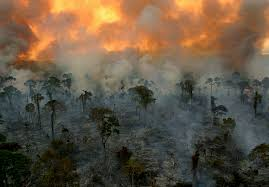 Removing tropical forests for palm oil