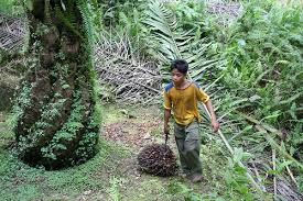 Oil palm industry and child labor