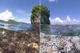 Climate Change and Reef Bleaching
