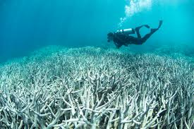 Bleaching of the Coral Reefs