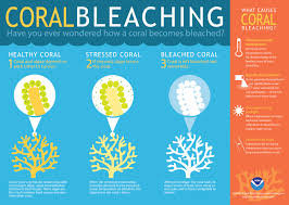 Coral bleaching and reefs