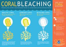 Reefs: Coral Bleaching