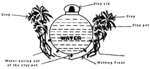 Olla: Ancient watering system