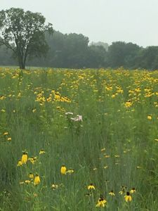 Pollinator Prairie