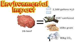 Carbon footprint of meat