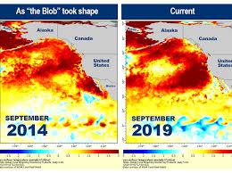 The Ocean Heat Wave